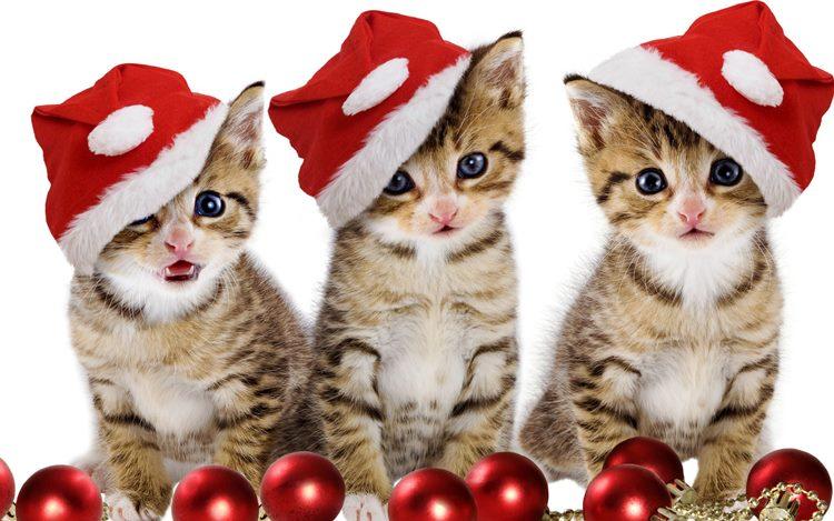 Imágenes de Navidad con gato